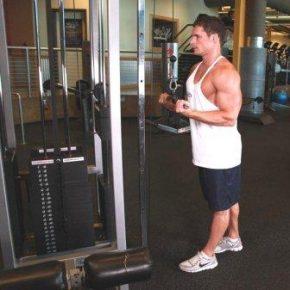 тренажерный зал- упражнения для бицепса и трицепса