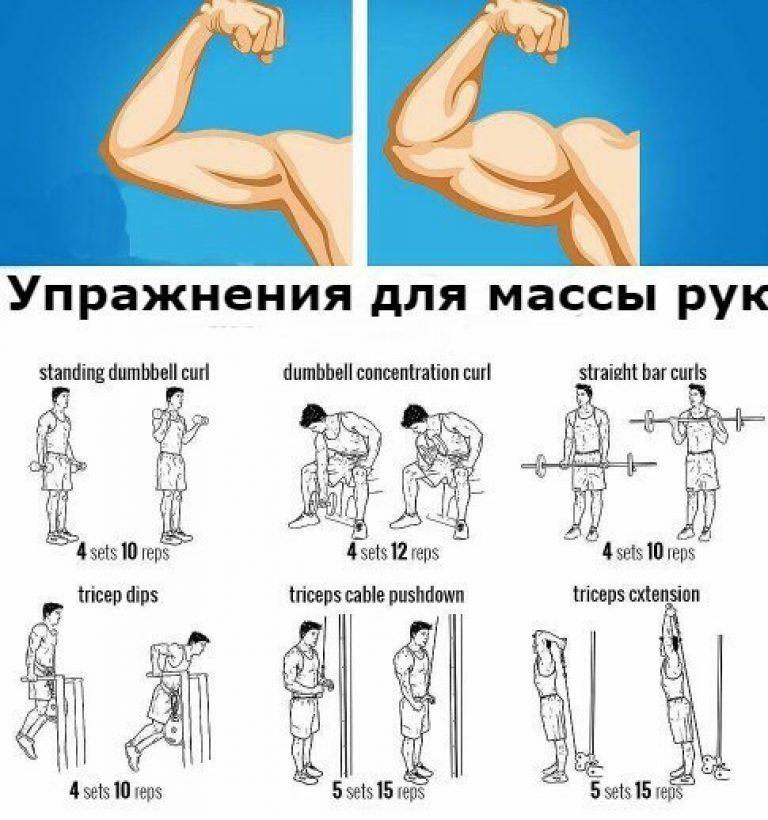 Упражнения на массу в домашних условиях с гантелями