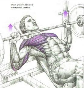 силовые упражнения для груди