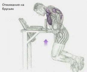 эффективные силовые упражнения для груди